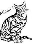 chat-assis-miaou